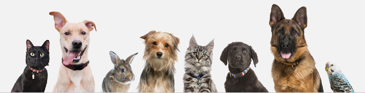 Home - Ottawa Humane Society