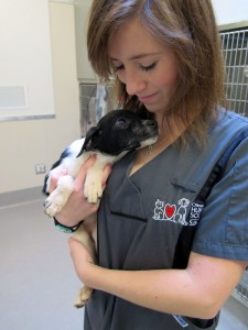 Patches is recovering at the Ottawa Humane Society