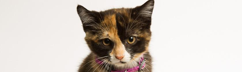 Ottawa Humane Society Feral Cats