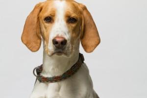 dog (4)