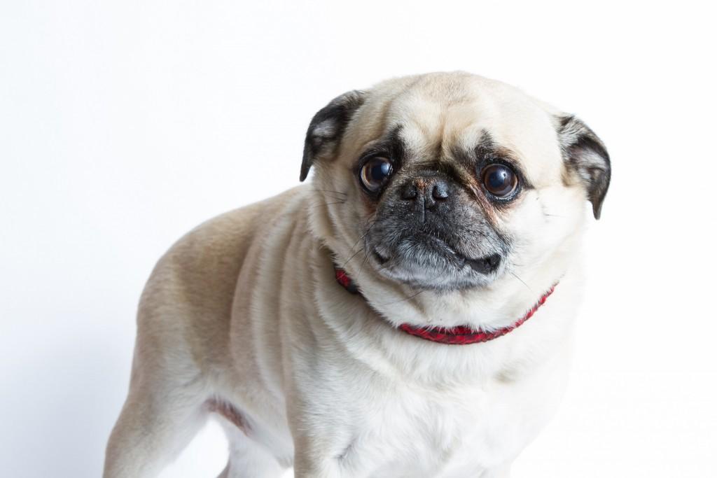 dog (6)