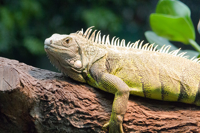 reptiles as pets dispelling common myths and misconceptions